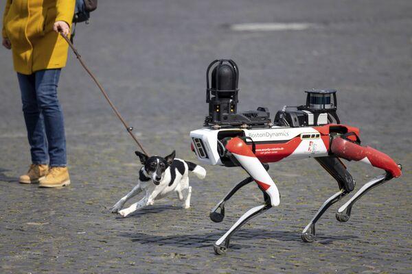 Собака лает на робота Spot в Эрфурте, Германия - Sputnik Азербайджан