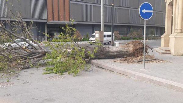 Поваленные деревья в Баку - Sputnik Азербайджан