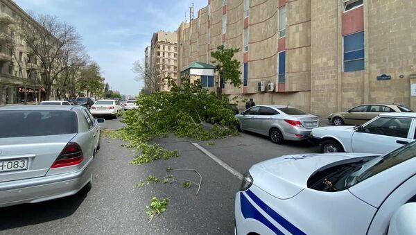 Поваленные дерево в Баку - Sputnik Азербайджан