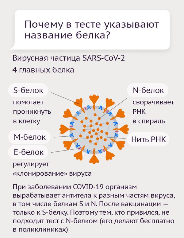 Тесты на антитела к коронавирусу-6 - Sputnik Азербайджан