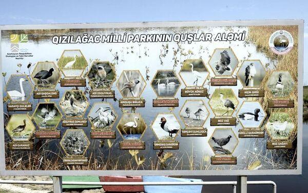 Гызылагаджский национальный парк - Sputnik Азербайджан