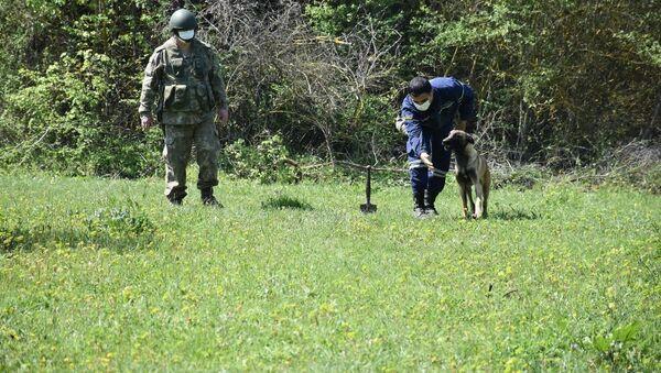 Группа кинологов-инструкторов  с собаками миноискателями в Азербайджане - Sputnik Azərbaycan