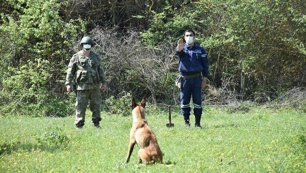 Группа кинологов-инструкторов  с собаками-миноискателями - Sputnik Азербайджан