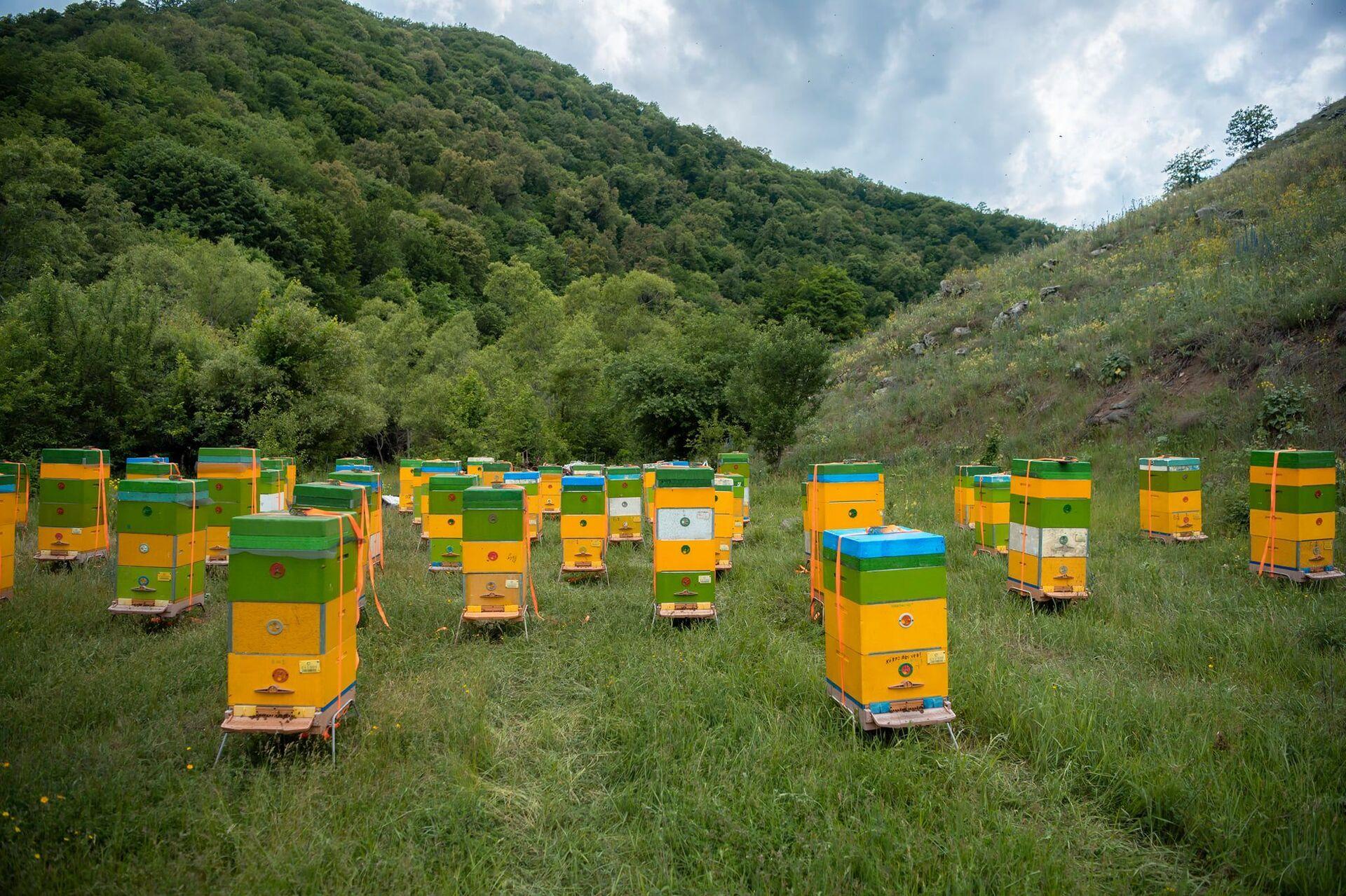 В Кельбаджарский район переезжают скотоводческие хозяйства и пасеки - Sputnik Азербайджан, 1920, 12.06.2021