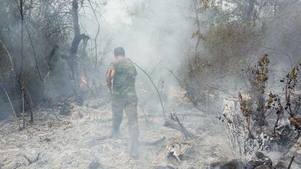 Мужчина тушит пожар в лесу - Sputnik Азербайджан