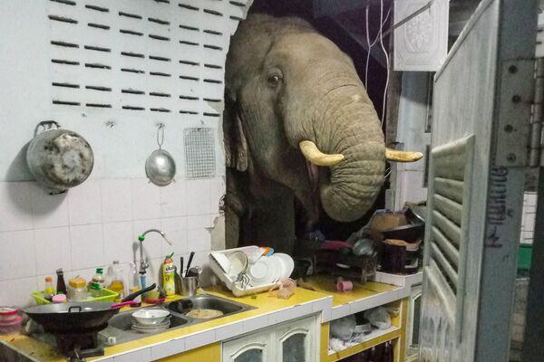 Пробивший стену жилого дома слон в Таиланде - Sputnik Азербайджан