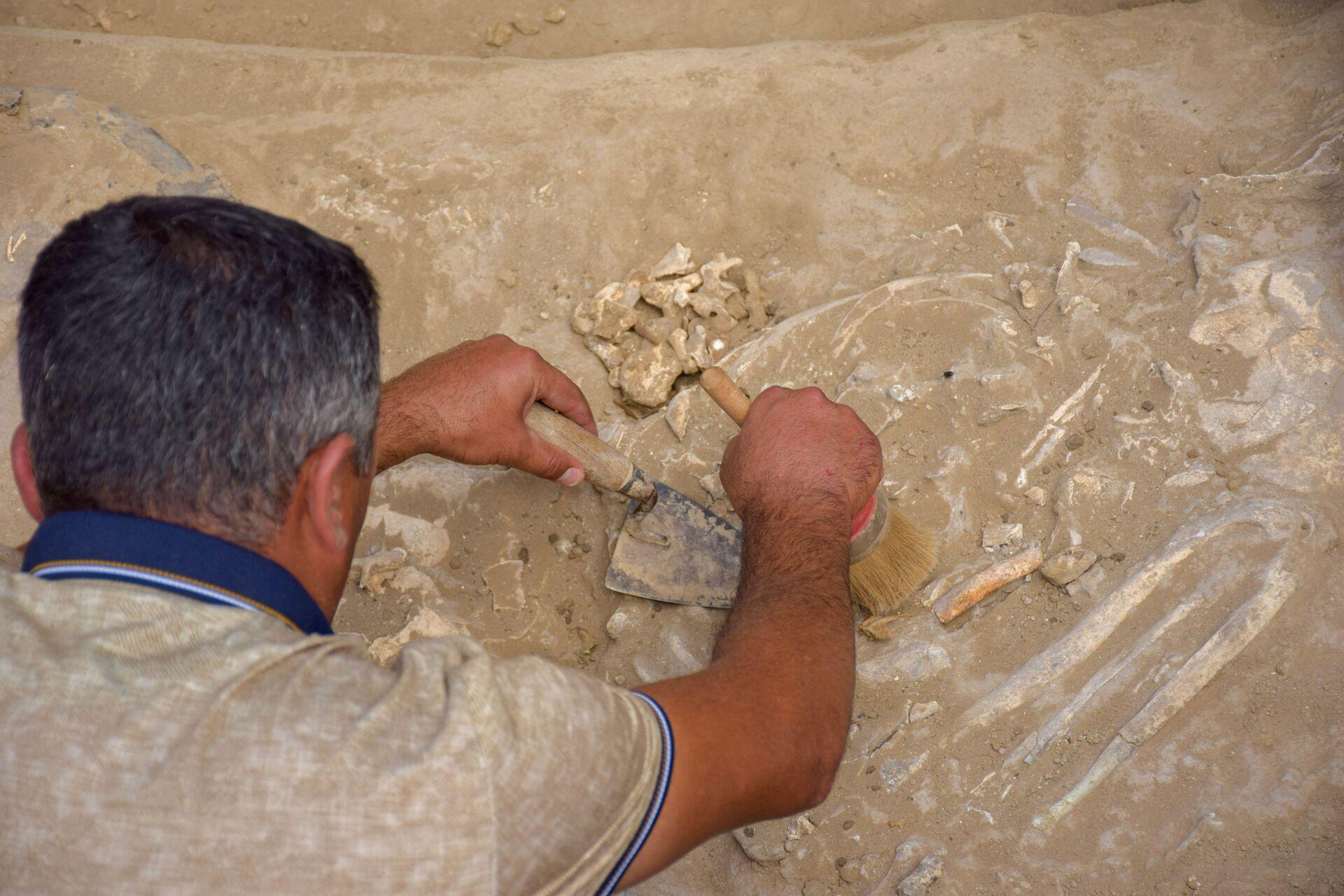 Археолог: уникальная находка, сделанная в Азербайджане, заинтересует ученых мира - Sputnik Азербайджан, 1920, 26.07.2021
