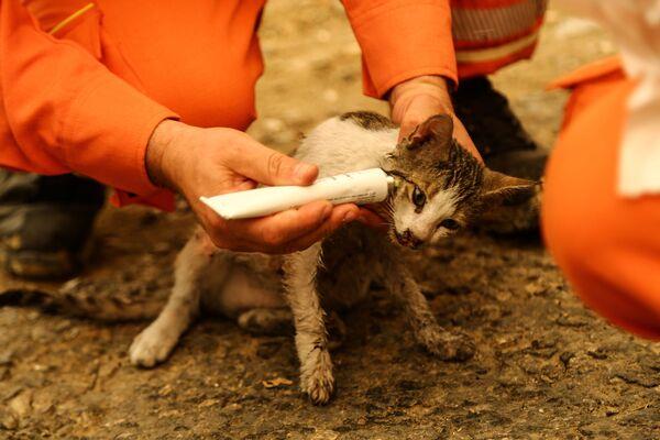 Волонтеры лечат кошку, раненую во время лесного пожара недалеко от города Манавгат - Sputnik Азербайджан