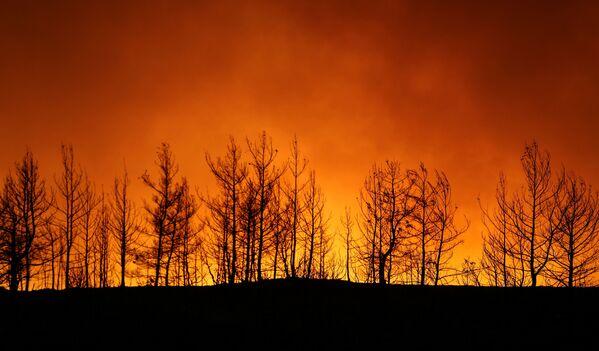 Дым над лесом вокруг Манавгата - Sputnik Азербайджан