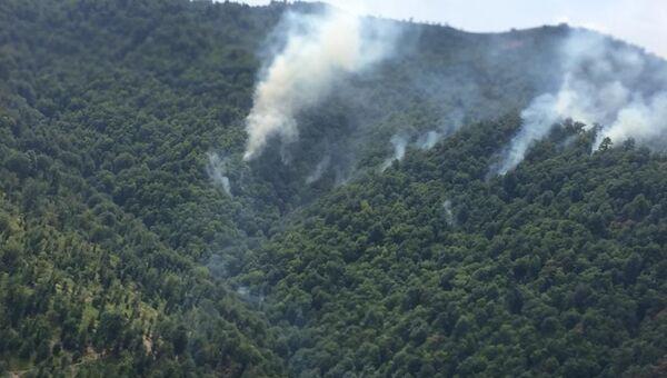 Лесной пожар у села Хонуба Ярдымлинского района - Sputnik Азербайджан