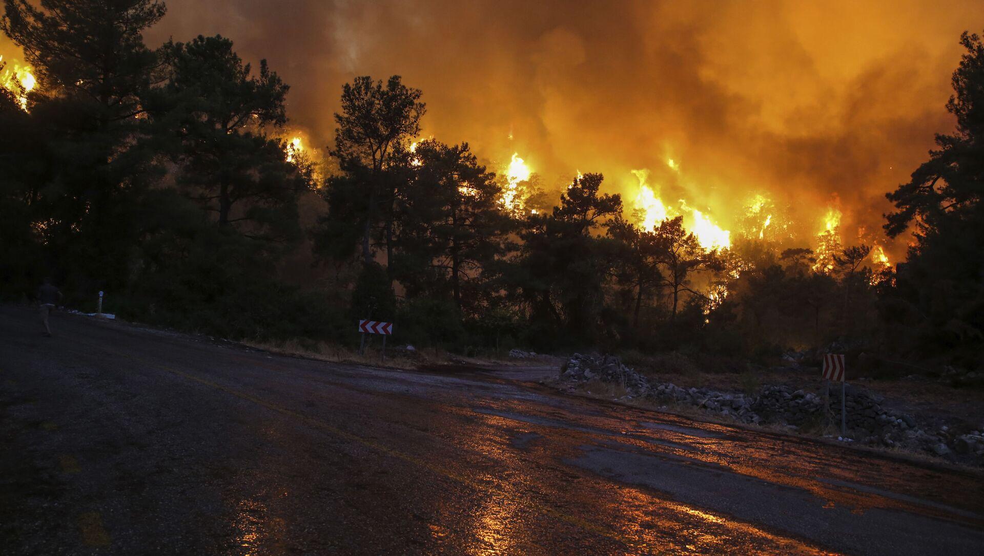 Лесной пожар в Турции, фото из архива - Sputnik Azərbaycan, 1920, 09.08.2021