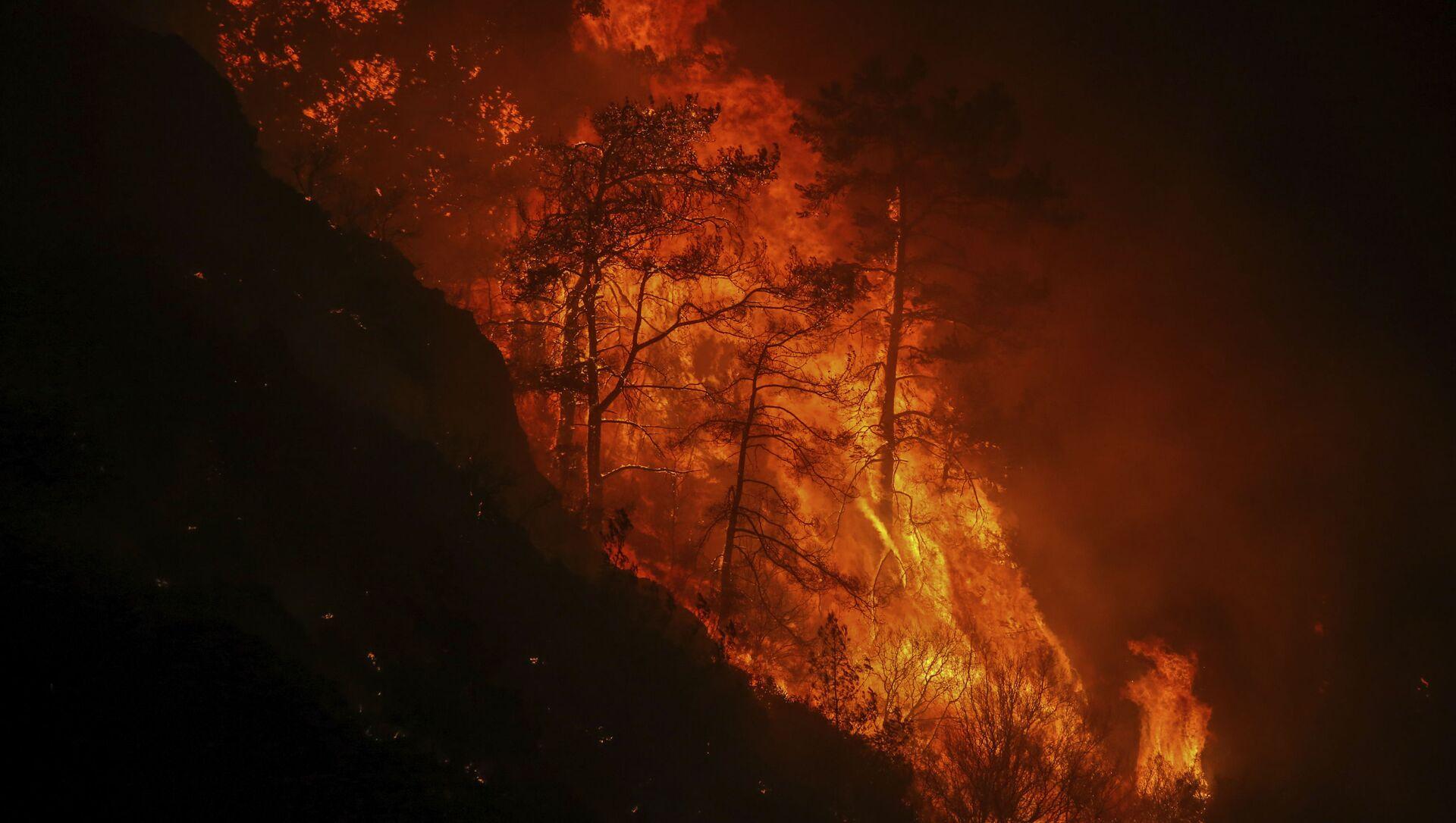 Лесной пожар в Турции, фото из архива - Sputnik Азербайджан, 1920, 09.08.2021