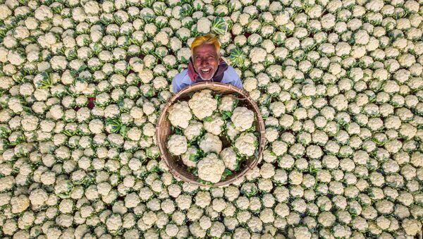 Счастливый фермер - Sputnik Азербайджан