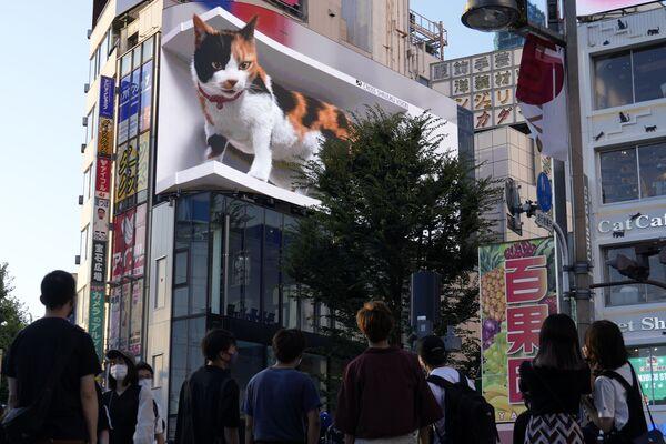 3D-видеореклама с изображением гигантского кота в торговом районе Синдзюку в Токио - Sputnik Азербайджан