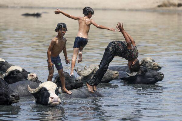 Иракские мальчики плавают со стадом буйволов в реке - Sputnik Азербайджан