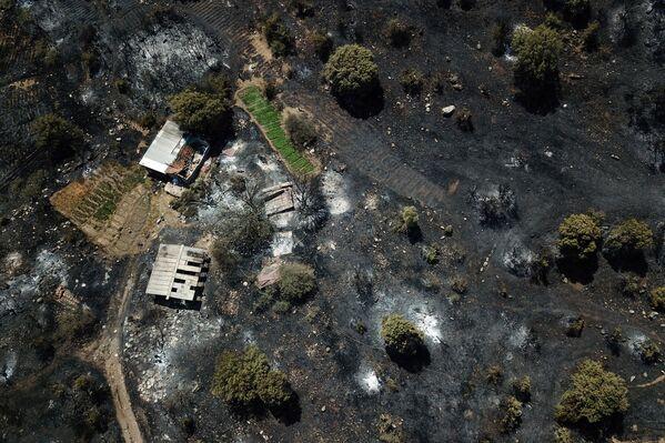 Превращенная в пепел деревня близ города Мугла. - Sputnik Азербайджан