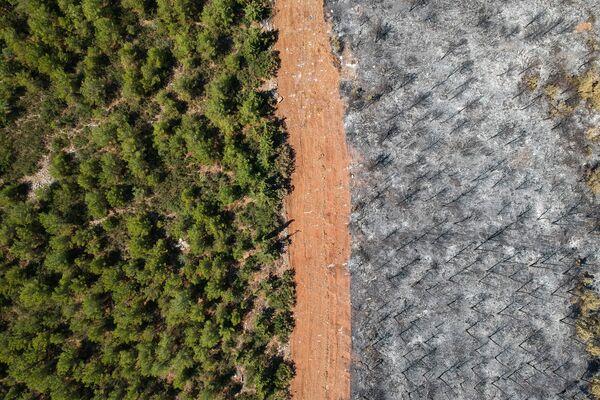 В Турции уже две недели продолжаются лесные пожары в различных регионах страны. - Sputnik Азербайджан