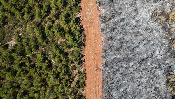 Последствия лесных пожаров в Турции - Sputnik Azərbaycan