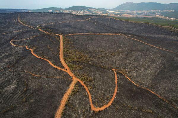 Сгоревший лесной массив в Мугле, в районе Каваклыдере. - Sputnik Азербайджан