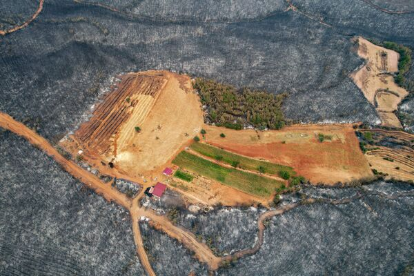 Последствия лесных пожаров в Турции. - Sputnik Азербайджан