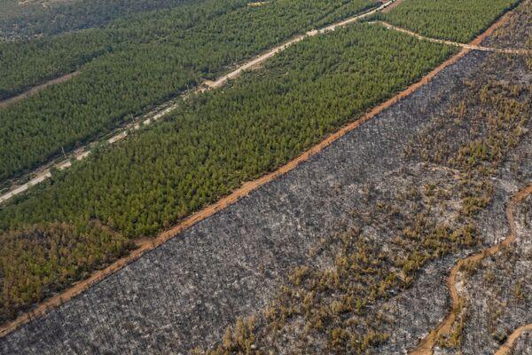 Власти 12 турецких провинций ввели запрет на посещение лесных массивов до конца августа из-за продолжающихся в стране лесных пожаров. - Sputnik Азербайджан