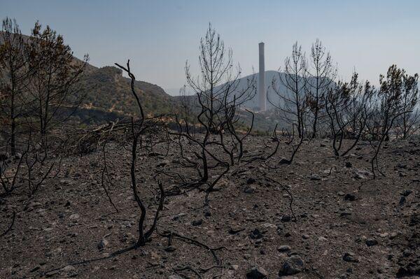 Сгоревший лесной массив рядом с тепловой электростанцией в городе Миляс (провинция Мугла). - Sputnik Азербайджан