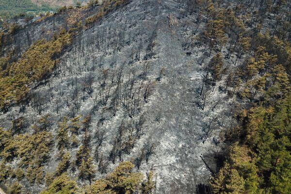 Турецкие власти намерены посадить 250 миллионов деревьев в регионах, пострадавших от лесных пожаров. - Sputnik Азербайджан