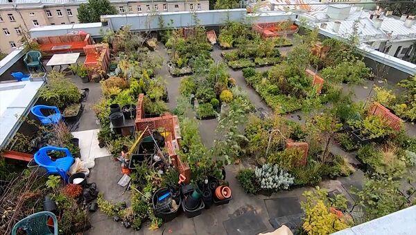 Дизайнер создал сад на крыше дома своими руками - видео - Sputnik Азербайджан