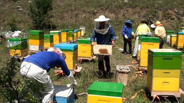 Впервые через 28 лет пчеловоды собрали мед в Кяльбаджаре и Лачине - Sputnik Азербайджан