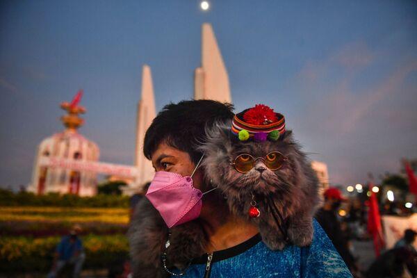 Banqkokda Tailandın baş nazirinin istefasını tələb edən nümayiş zamanı çiynində pişik olan etirazçı. - Sputnik Azərbaycan