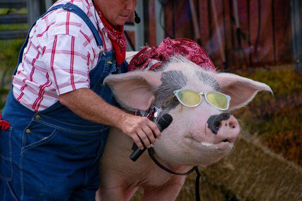 Фермер дает свинье микрофон для пения на сцене комедийного шоу The Pork Chop Revue на ярмарке штата Кентукки в Луисвилле, США. - Sputnik Азербайджан
