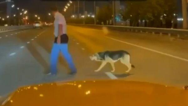 Автоинспектор помог испуганной собаке перейти дорогу - видео - Sputnik Азербайджан