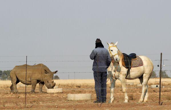 Qoruq işçisi öz atı ilə Buffalo Dream rançosunda kərgədana baxır. - Sputnik Azərbaycan