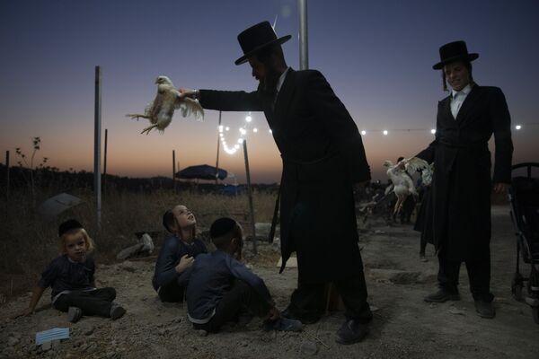 Ультраортодоксальный еврей держит курицу над своими детьми в рамках ритуала Капарот в Бейт-Шемеш, Израиль. - Sputnik Азербайджан