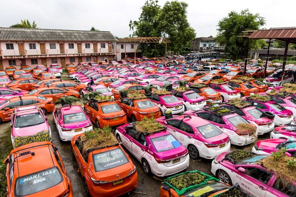 Мини-огороды на крышах автомобилей компании по аренде такси, бизнес которой пострадал из-за пандемии коронавируса. - Sputnik Азербайджан