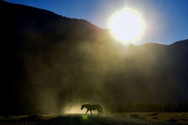 Лошадь пасется возле автомобильной дороги в долине реки Чулышман в Республике Алтай. - Sputnik Азербайджан
