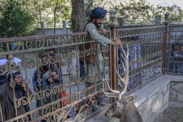 Боец Талибана* касается оленя в вольере в Кабульском зоопарке. - Sputnik Азербайджан