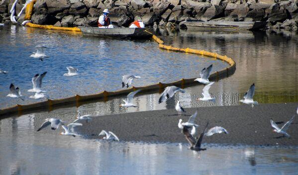 Нефть проникла также в местный экологический заповедник и привела к гибели рыб и птиц. - Sputnik Азербайджан