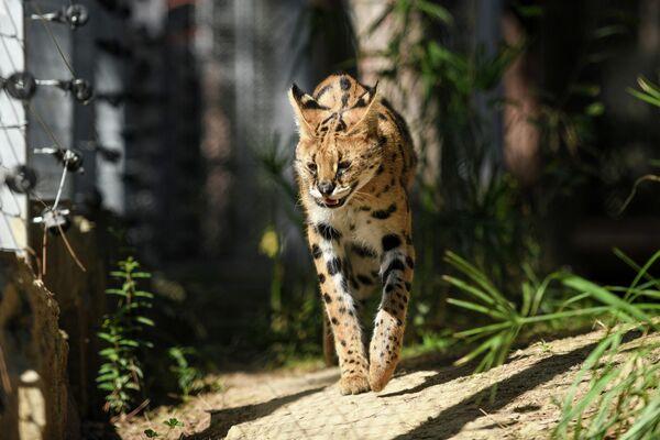 При реконструкции зоопарка особое внимание уделялось сохранению имеющихся на территории деревьев и кустарников. - Sputnik Азербайджан