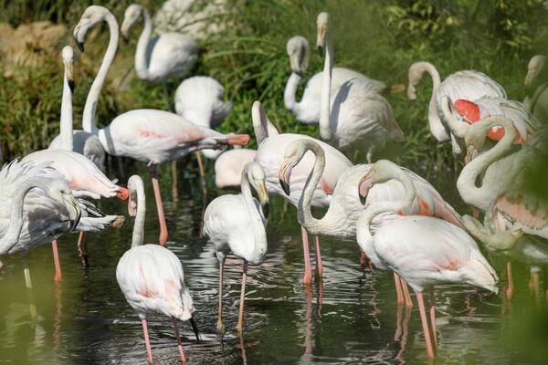 В благоустроенном зоопарке, площадь озеленений в котором увеличена, создана более естественная среда. - Sputnik Азербайджан