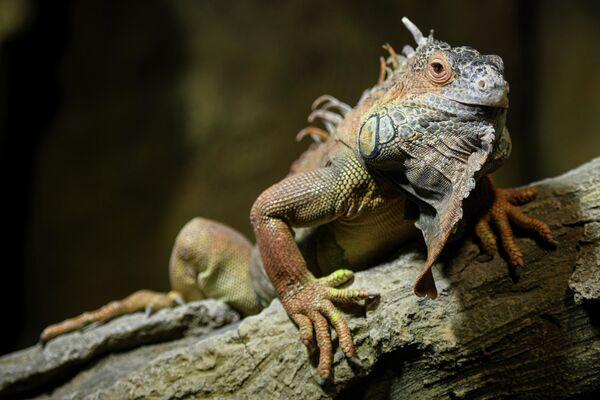 В настоящее время общее число видов животных в зоопарке составляет 125, а видов, внесенных в Красную книгу, – 22. - Sputnik Азербайджан