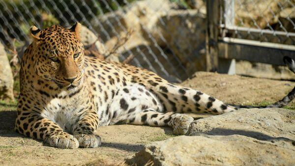 Бакинский зоопарк - Sputnik Азербайджан