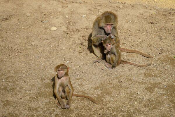 Вольеры, где содержатся животные, обустроены с учетом специфических нужд каждого вида, их площадь значительно увеличена. - Sputnik Азербайджан