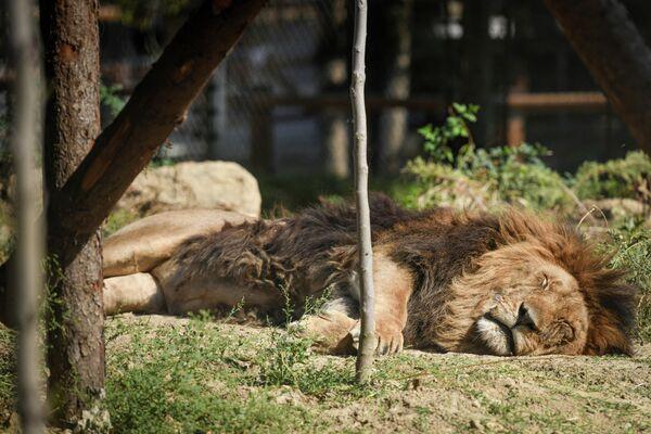 Также в зоопарке функционирует ветеринарная клиника. - Sputnik Азербайджан