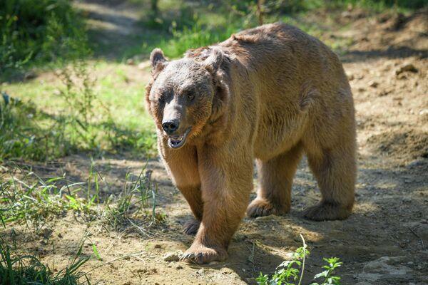 После реконструкции комплекс зоопарка стал комфортным и интересным местом для посетителей. - Sputnik Азербайджан