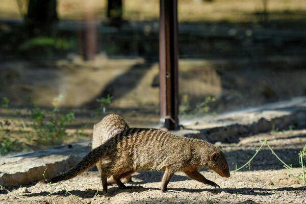 Посетителей в зоопарк будут пускать по ковид-паспортам. - Sputnik Азербайджан