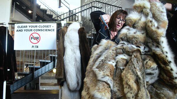 Женщина разрезает свою шубу из рыси, которую она пожертвовала организации PETA - Sputnik Азербайджан