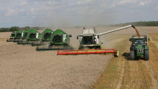 Уборка пшеницы на полях сельхозпредприятия. - Sputnik Азербайджан