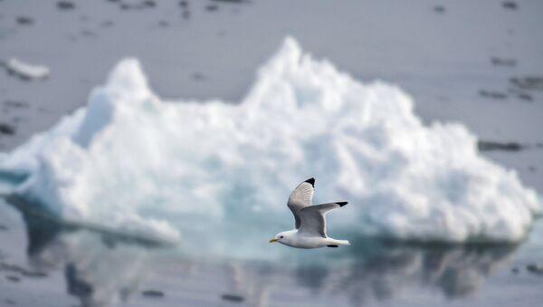 Арктическая экспедиция Кара-зима 2015 - Sputnik Азербайджан