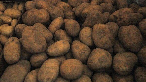 Kartof - Sputnik Azərbaycan